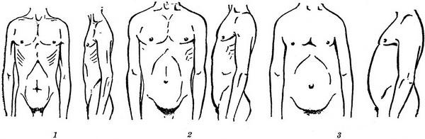 the shape of the chest and abdomen