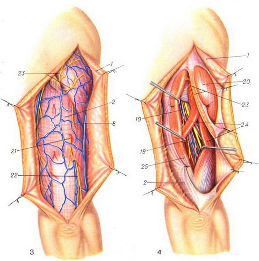 superficial and deep vessels and nerves of the posterior surface of the shoulder