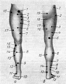 motor point nerves and muscles of the legs