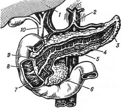 pancreas structure